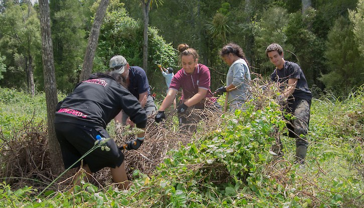 Student volunteers deal with weedy vines