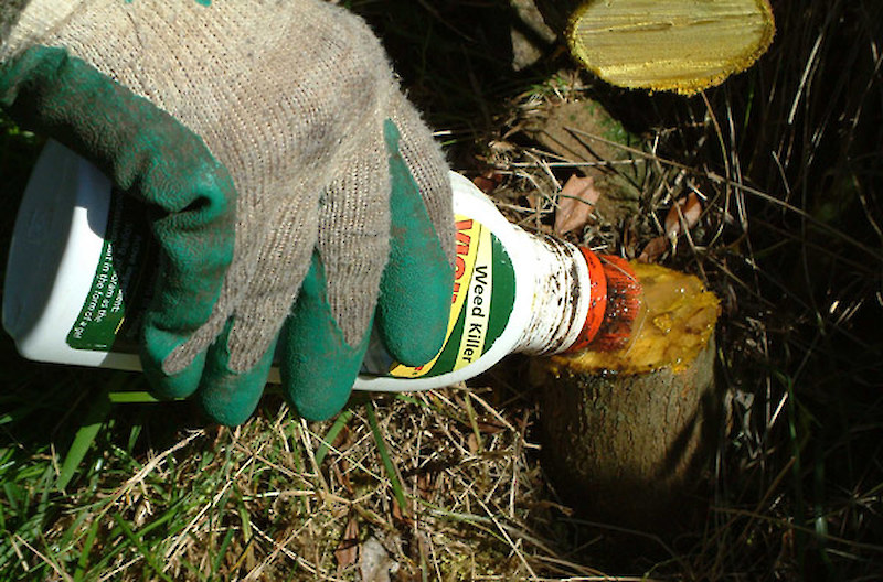 Controlling Pest Shrubs & Trees • Weedbusters