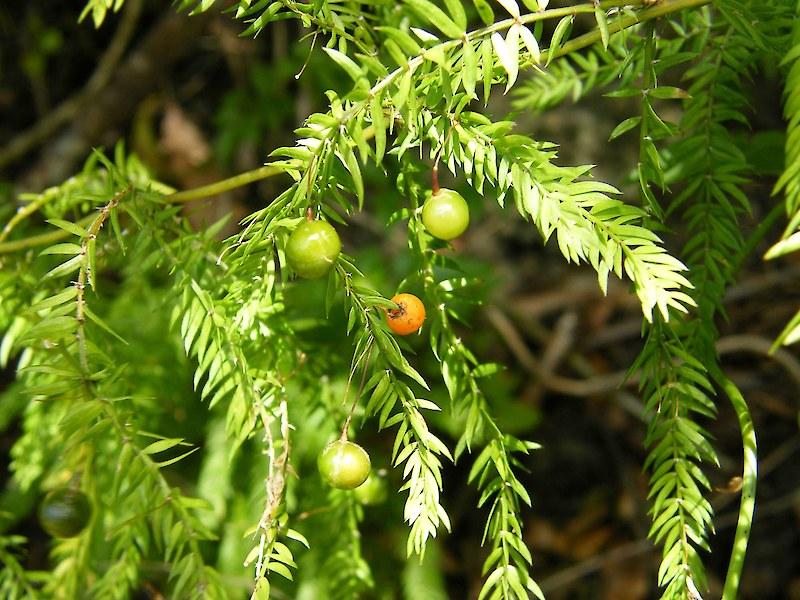 climbing plant stem crossword clue